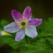 Fiore simbolo di buona salute